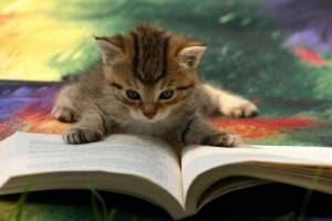 cat-catreadingbook03.jpg